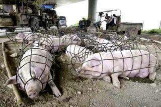 Animal+Abuse+-+Human+Cruelty