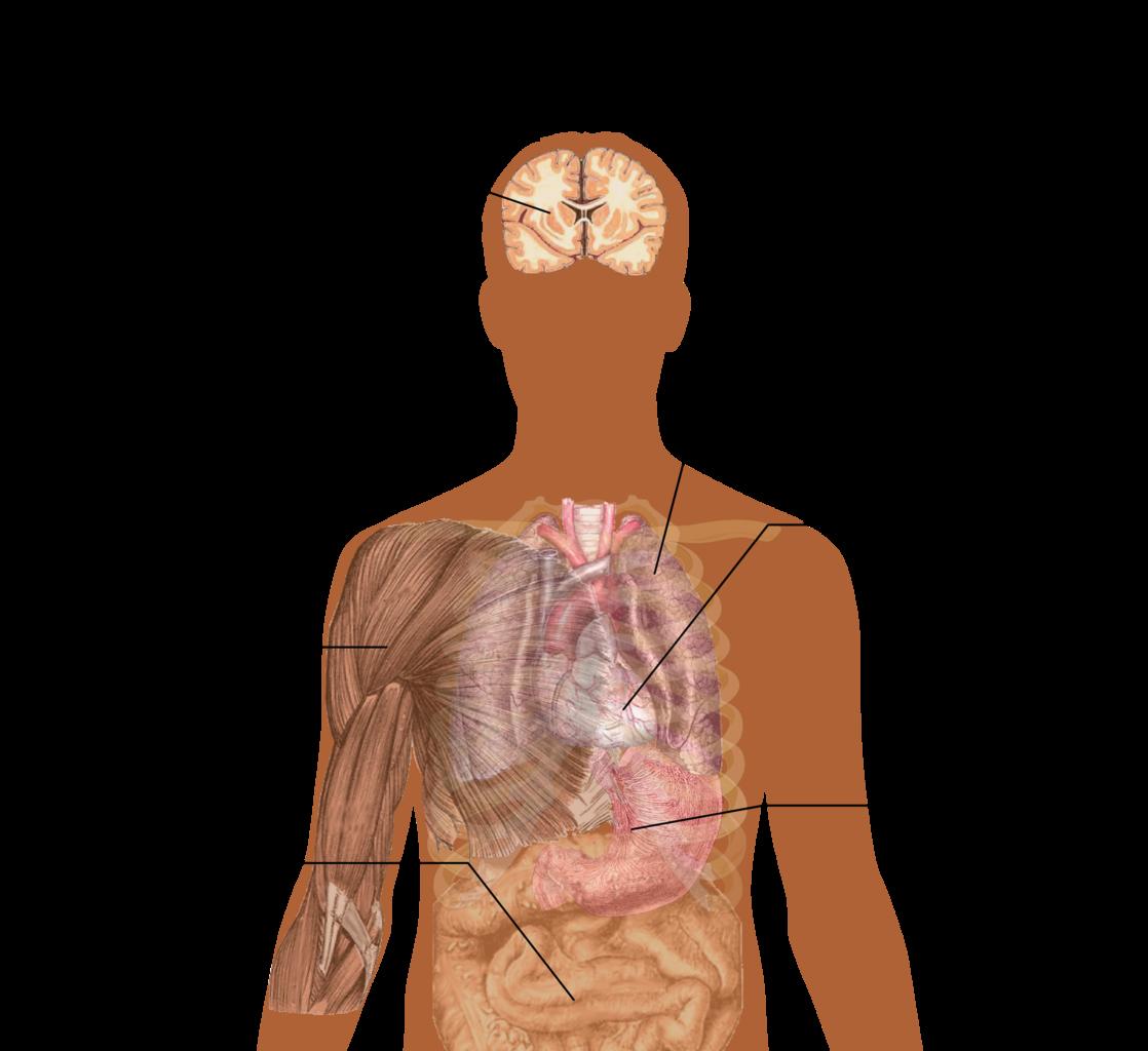 Understanding your body's pH