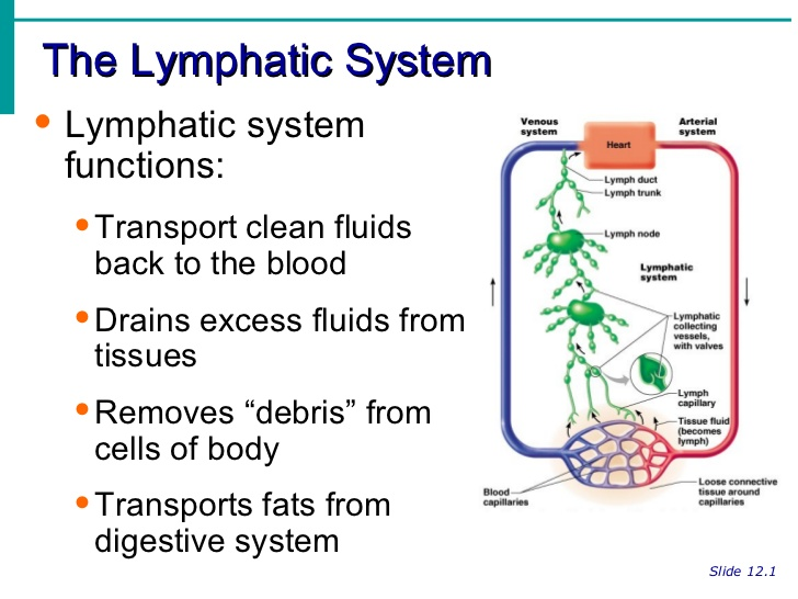 How to Move the Lymphatic System