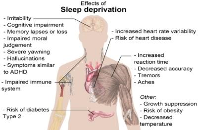 herbs to help you sleep