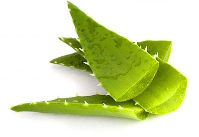 aloe-vera_aloe-leavess_04